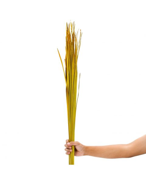 Leewadee Dried coloured palm leaf bunch for floor vases decorative grass twig bunch, 47 inches, Dried Natural-Grass, yellow