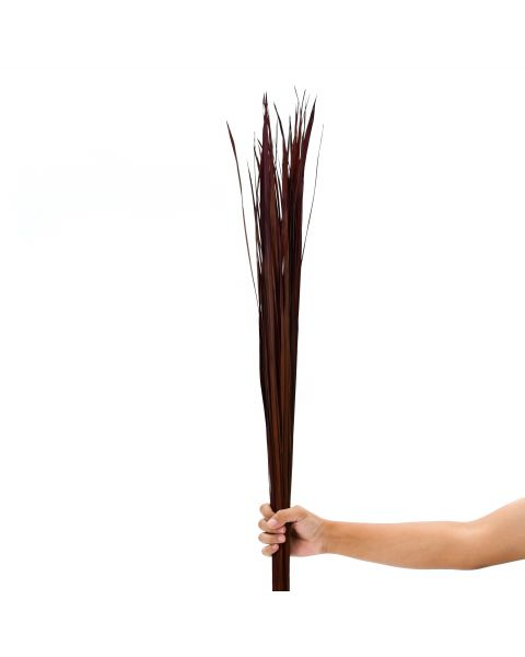 Leewadee Dried coloured palm leaf bunch for floor vases decorative grass twig bunch, 47 inches, Dried Natural-Grass, brown