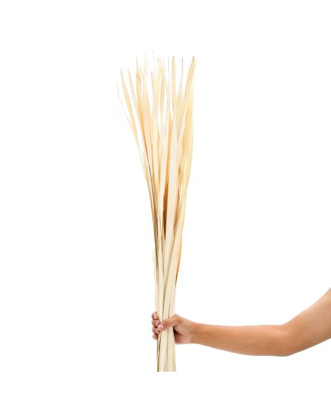 Leewadee Dried coloured palm leaf bunch for floor vases decorative grass twig bunch, 47 inches, Palm Leaf, ecru