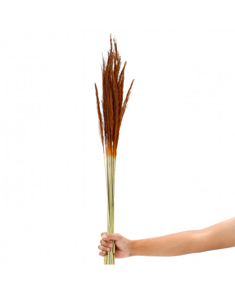 Leewadee Dried coloured palm leaf bunch for floor vases decorative grass twig bunch, 47 inches, Dried Natural-Grass, orange