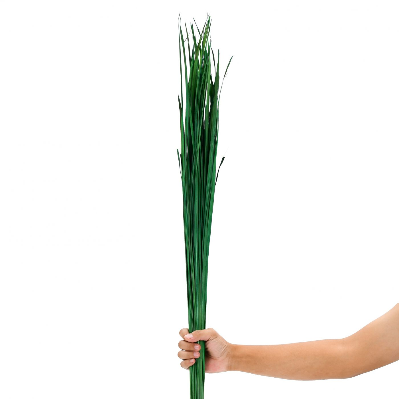 Green 0.4x47 inches Dried colored natural grass bunch for floor vases decorative twig bunch